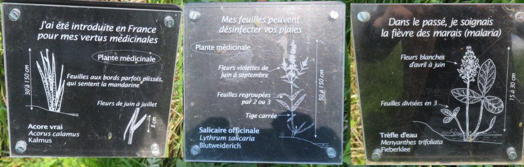 acorus calamus, lythrum salicaria, menyanthes trifoliatia